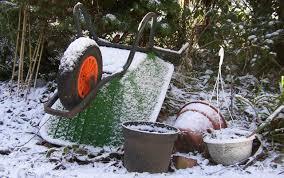 gardening in winter a complete guide primrose blog