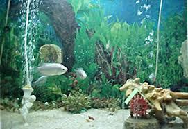 ornamental fisheries fisheries department haryana