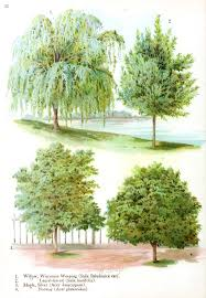 different types of trees best types of trees by different types trees illustration on home