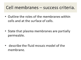 cell membranes what is the cell membranes structure and functions