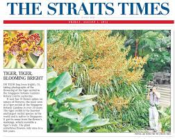 welcome tiger orchid front page st newspaper 2014 aug 01 friday