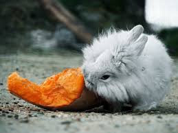can rabbits eat potatoes a dose of carbohydrates oct 2017