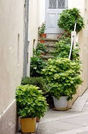 Plants In House Plants In Pots On The Stairs Of A House Stock Photo Picture And