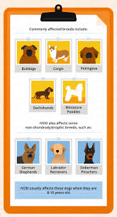 intervertebral disc disease ivdd in dogs canna pet