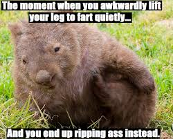 Wombat Memes - wombats album on imgur