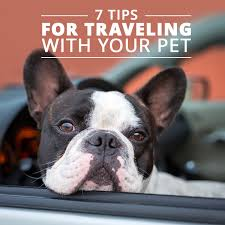 Traveling With Pets images 7 tips for traveling with your pets png