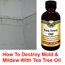 How To Remove Mold From Bathroom Remove Mold U0026 Mildew Naturally With Tea Tree Oil