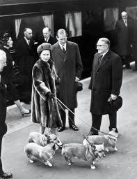 100 the queen s corgis 80 years of the queen u0027s royal
