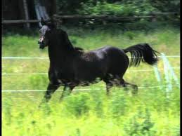 Black Horse Mustang Black Horse Dance With Me Baby Youtube