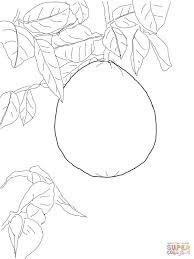 pomelo on tree coloring page free printable coloring pages