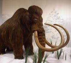 woolly mammoth 2016 cloning