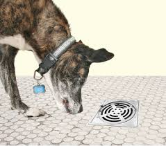 shelter rescue essentials animal sheltering online by the