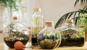 desktop gardens simple ideas for cool diy terrariums