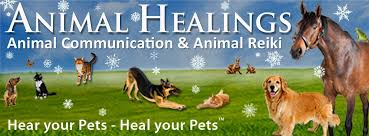 grieving the loss of a dog pet loss grief support with animal communication provides healing