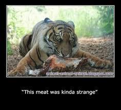 Memes Animals - cool animals memes