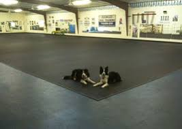 Rubber Mats For Backyard by Kennel And Doggy Daycare Rubber Flooring