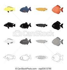 eps vectors of different types of aquarium and sea fish the moon