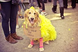 Big Bird Halloween Costumes Halloween Dog Parade 2012 Tompkins Square Park East Vil U2026 Flickr