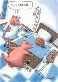 Funny Pig Memes - funny pig cartoon