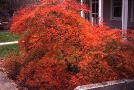 science fall color u2013 garden professors