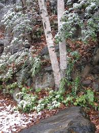 08 contact us u2013 botanical gardens at asheville