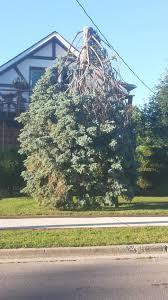 this tree looks like it s photo huffpost