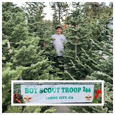 boy scouts selling christmas trees in tahoe city sierrasun com