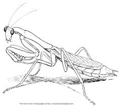 praying mantis coloring page crayon palace intended for the most