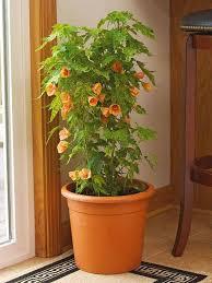 top 15 indoor flowering plants livinghours
