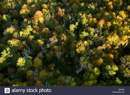 aerial view from air balloon looking on berkshire trees