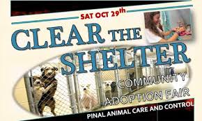 The Shelter by Pinal County News Santanvalley Com