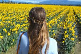 Skagit Valley Tulip Festival Bloom Map Guide To The Skagit Valley Tulip Festival Northwest Blonde