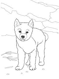 dingo puppy coloring free printable coloring pages