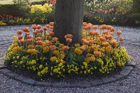 plants to grow under evergreen trees tips on how to plant your garden under a tree