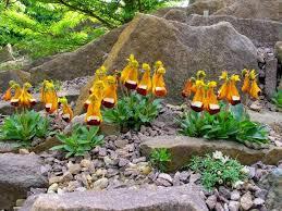 321 best alpine garden images on pinterest alpine garden nature