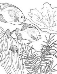 drawn coral reef marine life coral pencil and in color drawn