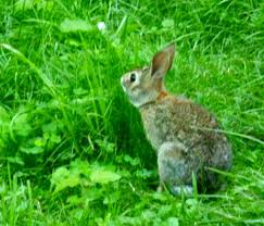 your backyard wildlife habitat hester the bunny and i have a talk