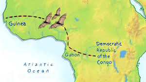 Map Of Africa Countries 100 Congo River On Map Of Africa Map Of Africa Countries Of