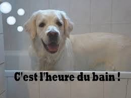 comment cuisiner du chien tuto comment s occuper de l hygiène de chien