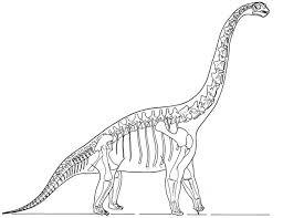 dinosaur skeleton coloring coloring