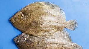 comment cuisiner la sole limande poisson comment cuisiner ce poisson plat