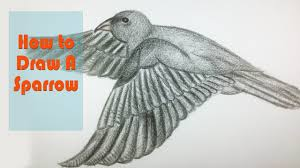 how to draw a sparrow drawing amazing bird for kids youtube