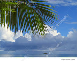 palm tree leaves and cloudscape picture