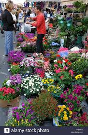 flowers and plants flowers and plants for sale in the town market oneglia imperia