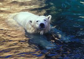 swimming oregon zoo