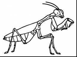 praying mantis coloring page line drawings 1471