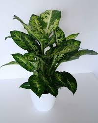 Plants That Don T Need Water Office Plants That Don T Need Sunlight Home Interiror And