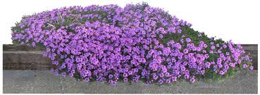 30 plain landscape plants purple flower u2013 izvipi com
