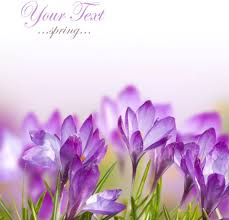 image of spring flowers stock photo of spring flowers 01 definition picture free stock
