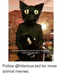 Halloween Cat Meme - my buddy dressed up as his cat for halloween look at the cat s face